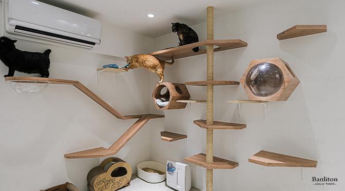 〔挑高夾層設計〕我有5隻貓室友!打造舒適透亮的貓咪專屬設計重點